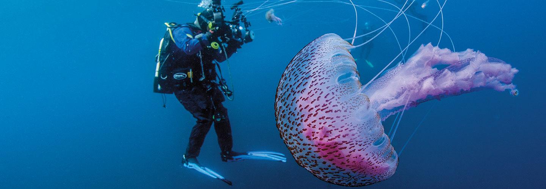 U Wish Jellyfish The Rise of the...